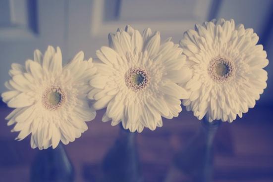 DIY Vases For St-Valentine Flowers: Gerbers