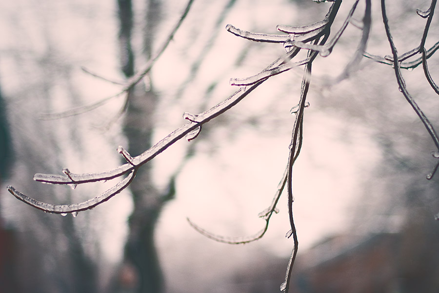 Branches in Freezing rain in Point-St-Charles Montreal